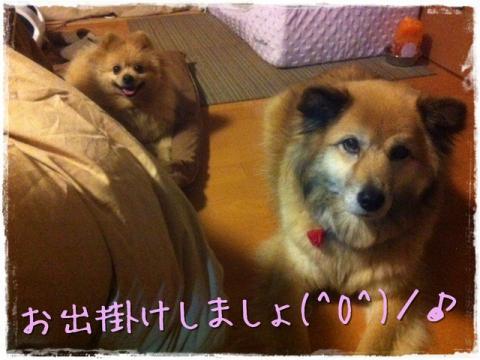 お出掛けしましょ(^O^)/♪