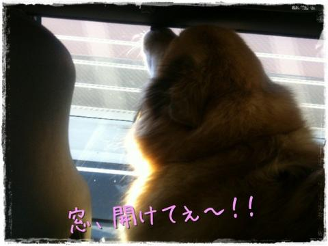 窓、開けてぇ~!!
