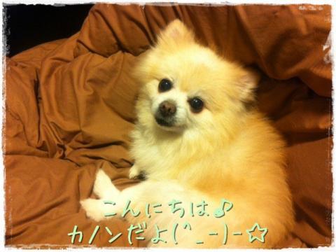 こんにちは♪カノンだよ(^_-)-☆