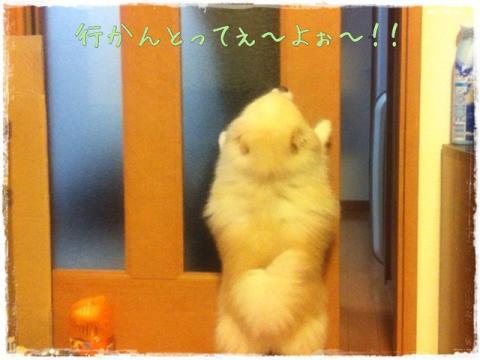 行かんとってぇ~よぉ~!!