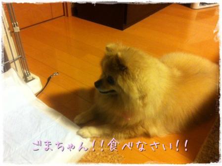 ごまちゃん!!食べなさい!!