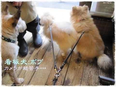 看板犬:ボブくん
