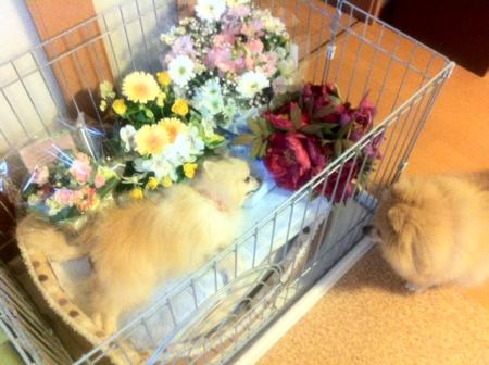 お花に囲まれたごまちゃん