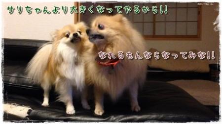 サリちゃんより大きくなってやるから!!