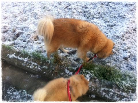 雪、だーいすきっ!!