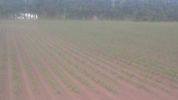 ロータリーカマボコ培土