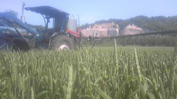小麦防除①