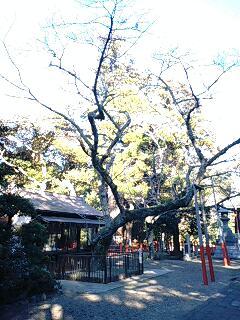 ikisoku (6)