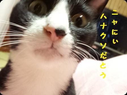 モモの鼻2