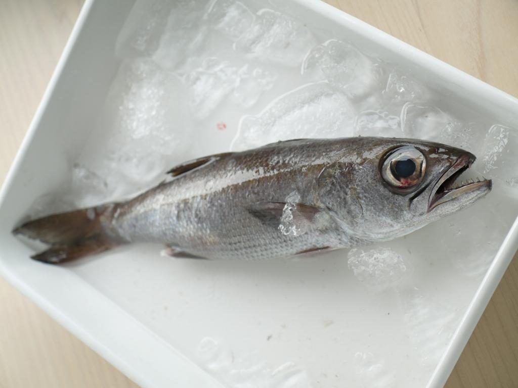 本日の獲物 黒むつ&白魚   料理...