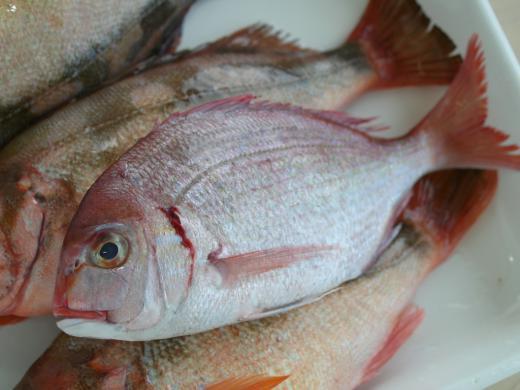 小鯛20110226