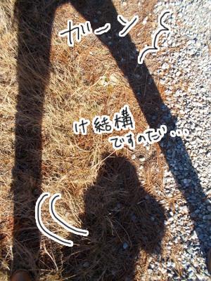 羊の国のラブラドール絵日記シニア!!「思うようには・・・」写真日記4