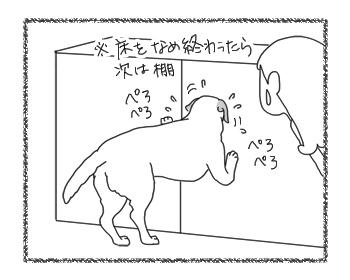 羊の国のラブラドール絵日記シニア!!「作戦ですかい?」3
