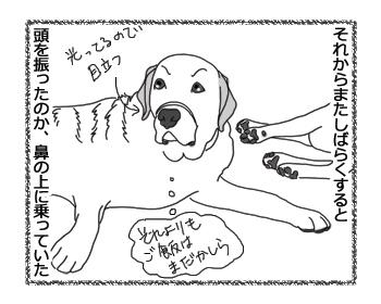 羊の国のラブラドール絵日記シニア!!「クロエちゃん観察日記」4