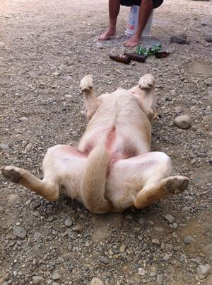 羊の国のラブラドール絵日記シニア!!「師走に抜かされて3回休み」写真1