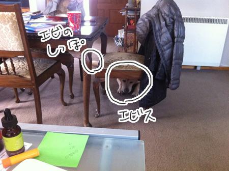 羊の国のラブラドール絵日記シニア!!「どこかな?クロエビス」3答