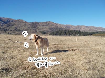 羊の国のラブラドール絵日記シニア!!「おもちかえり」写真3
