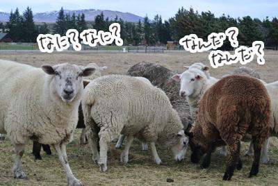 羊の国のラブラドール絵日記シニア!!「おもちかえり」写真6