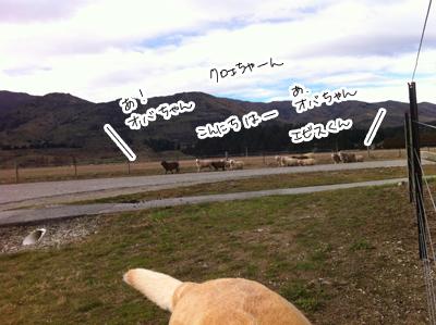 羊の国のラブラドール絵日記シニア!!シニアの貫録?写真2