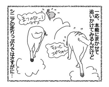 羊の国のラブラドール絵日記シニア!!「シニアの決めごと」2