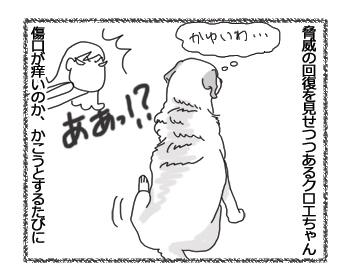 羊の国のラブラドール絵日記シニア!!「かいちゃダメ!」1