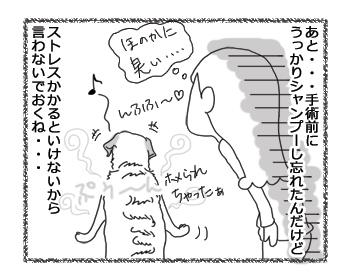 羊の国のラブラドール絵日記シニア!!「改めて」4