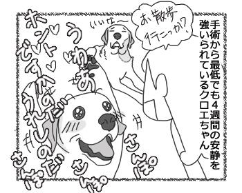 羊の国のラブラドール絵日記シニア!!お散歩ソロ活動1