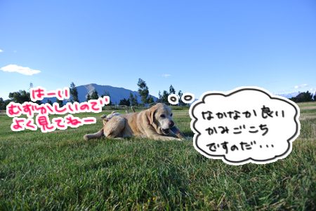 羊の国のラブラドール絵日記シニア!!「師走の途中ですが・・・」写真日記3