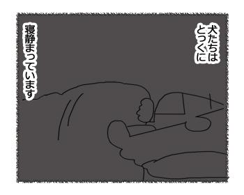 羊の国のラブラドール絵日記シニア!!「かぶりもの」2