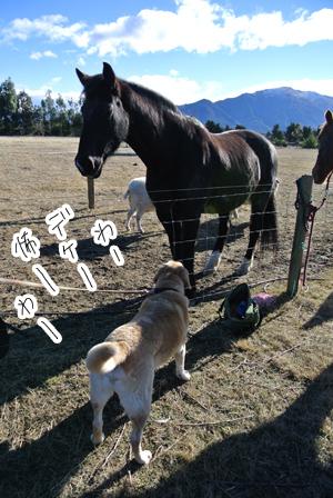 羊の国のラブラドール絵日記シニア!!「エビス・ブートキャンプ」写真2