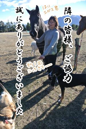 羊の国のラブラドール絵日記シニア!!「エビス・ブートキャンプ」写真3
