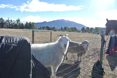 羊の国のラブラドール絵日記シニア!!「エビス・ブートキャンプ」写真4