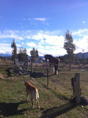羊の国のラブラドール絵日記シニア!!「ファームであれこれ」写真5