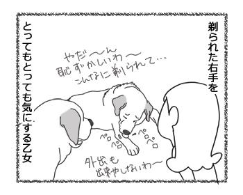 羊の国のラブラドール絵日記シニア!!「乙女の悩み」3
