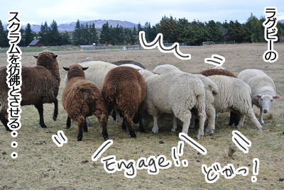 羊の国のラブラドール絵日記シニア!!「縮まる距離」写真日記3