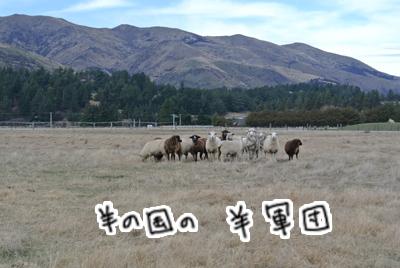 羊の国のラブラドール絵日記シニア!!「縮まる距離」写真日記6