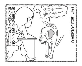 羊の国のラブラドール絵日記シニア!!「守ってあげたい」2