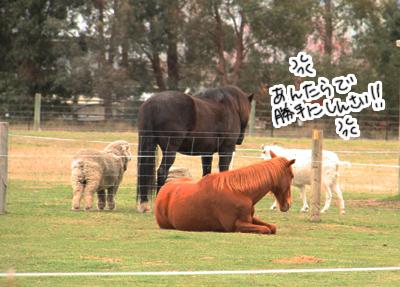 羊の国のラブラドール絵日記シニア!!「ご近所国勢調査」写真日記2
