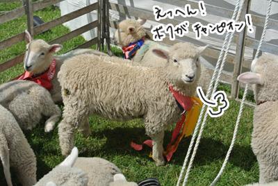 羊の国のラブラドール絵日記シニア!!「お疲れ!のワケは・・・」写真日記4