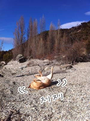 羊の国のラブラドール絵日記シニア!!「犬猫びっくりニュース!」写真日記3