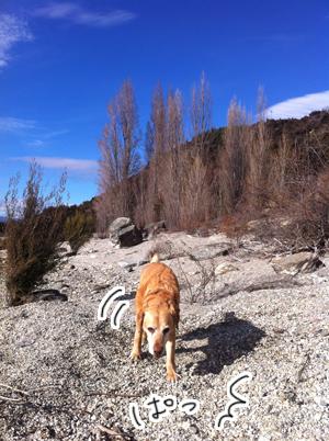 羊の国のラブラドール絵日記シニア!!「犬猫びっくりニュース!」写真日記5