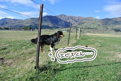 羊の国のラブラドール絵日記シニア!!「ファーム、不思議発見!」写真日記3