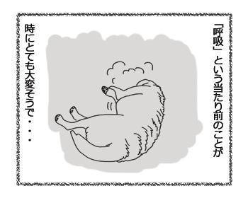 羊の国のラブラドール絵日記シニア!!「ちょっとご報告」3