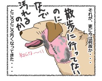 羊の国のラブラドール絵日記シニア!!「色で見る回復」3
