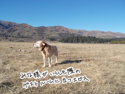 羊の国のラブラドール絵日記シニア!!「反省しまくりのだ」写真日記1