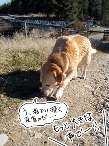 羊の国のラブラドール絵日記シニア!!「反省しまくりのだ」写真日記2