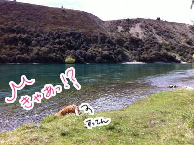羊の国のラブラドール絵日記シニア!!「わかってるっぽい?」4