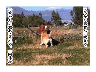 羊の国のラブラドール絵日記シニア!!「ファームステイのあとは」5