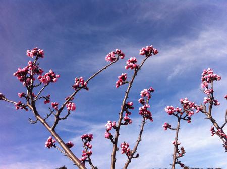 羊の国のラブラドール絵日記シニア!!「春じゃないのに」写真日記3