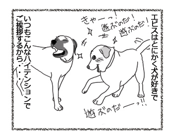羊の国のラブラドール絵日記シニア!!「エビスの先輩風」1